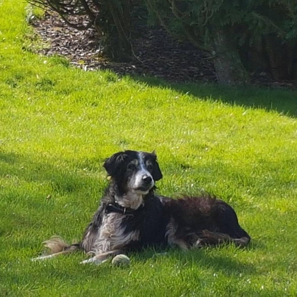 Pet sitter, dog walker and pet taxi in Luxembourg